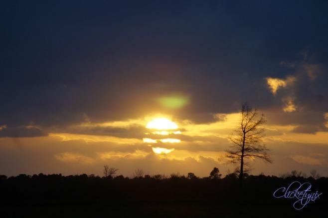 tree enjoying the sunset