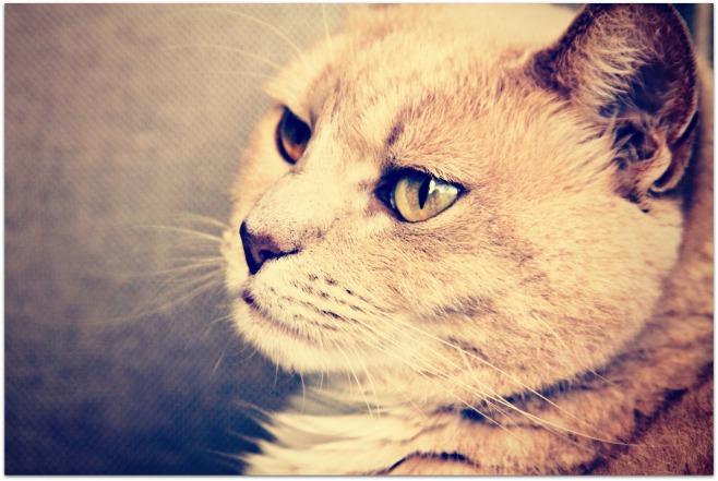 More Kitty Kat